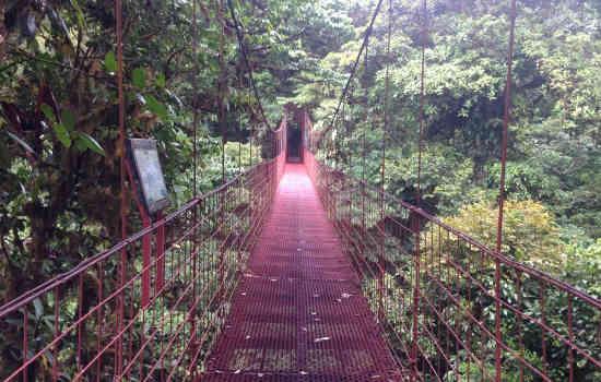 Monteverde-Reserve-Hike