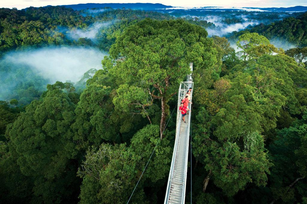 monteverde_cloud_forest